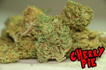 Cherry Pie Calimen